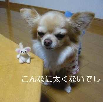 blog2012012502.jpg