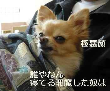 blog2012012902.jpg
