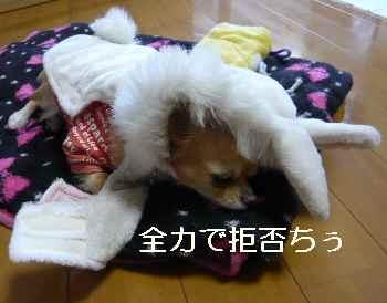 blog2012020202.jpg