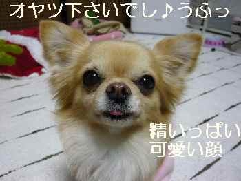 blog2012020402.jpg