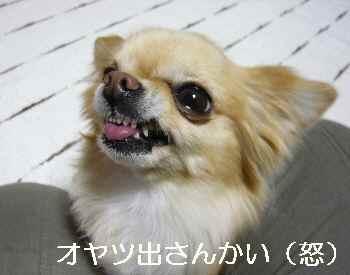 blog2012020404.jpg