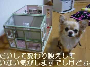 blog2012020701.jpg