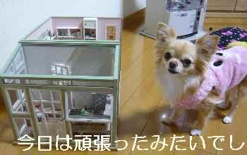 blog2012021005.jpg