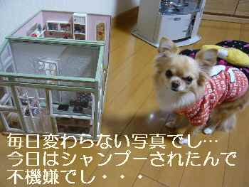 blog2012021105.jpg