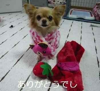 blog2012021502.jpg