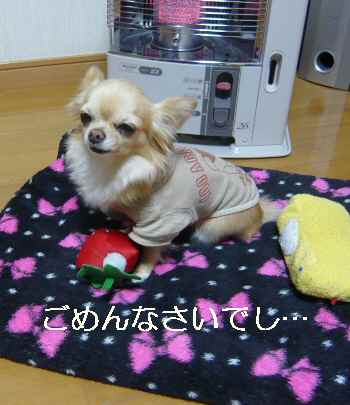 blog2012021602.jpg
