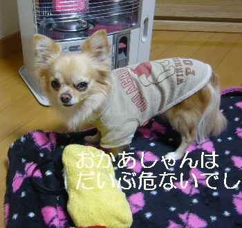 blog2012021704.jpg