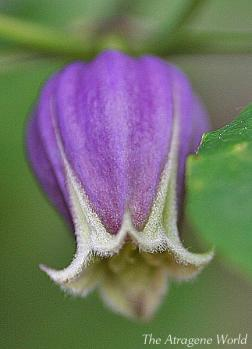 viorna1405201102.jpg
