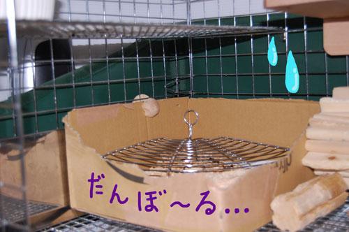 お手製トイレ