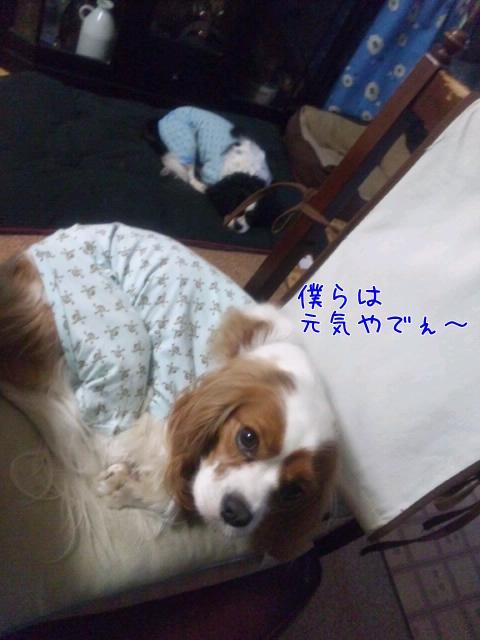 g_m.jpg