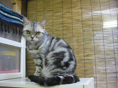 2-PET TANKさんの猫さん0996