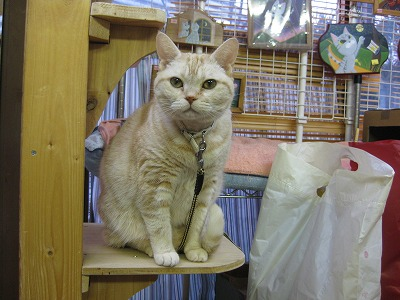 2-PET TANKさんの猫さん0987