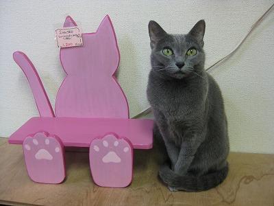 2-PET TANKさんの猫さん0985