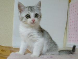misoka3.jpg