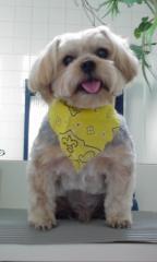 Beauty dog4 024