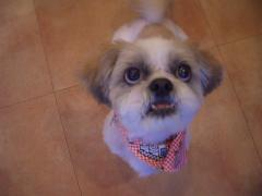 Beauty dog4 022