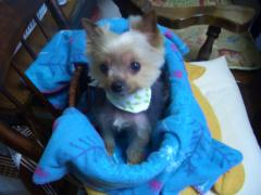 Beauty dog4 044