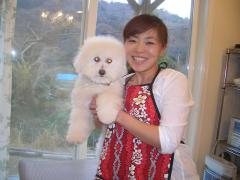 出張訪問トリミング Aya Housecall Dog Grooming