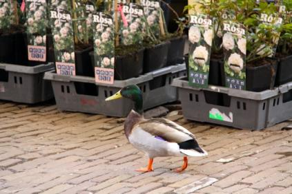 Flower Markt,Amsterdam - 08