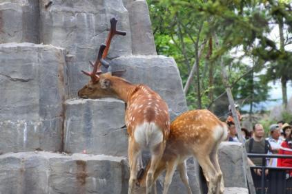 Day 06 旭山動物園,北海道 - 036