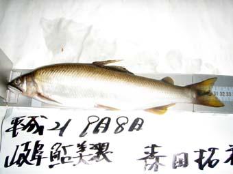 森田さんが釣った32.5センチ