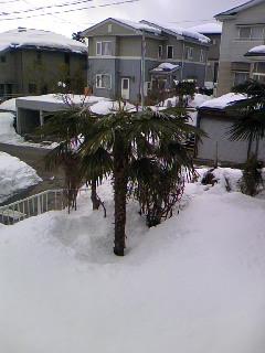 201002190.jpg
