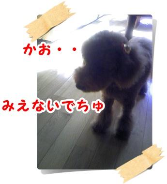201009278.jpg