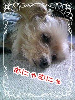 201011083.jpg