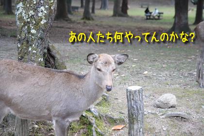IMG_6917_2.jpg