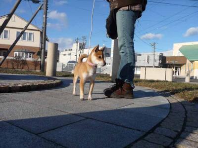 P1000354-AZUKI.jpg