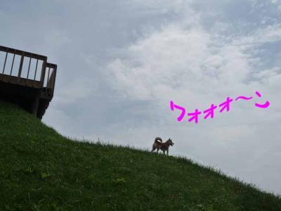 P1160312-AZUKI.jpg