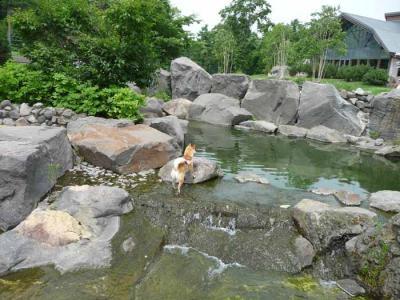 P1160329-AZUKI.jpg