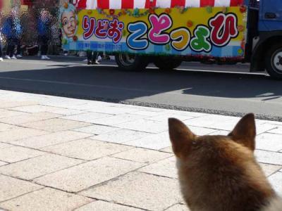 P1160829-AZUKI.jpg