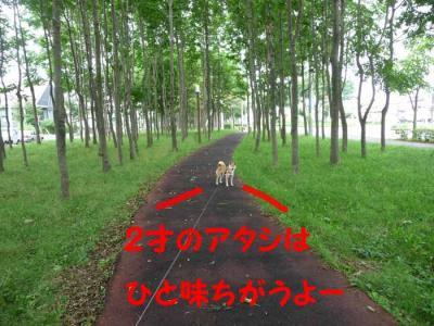 P1170345-AZUKI.jpg