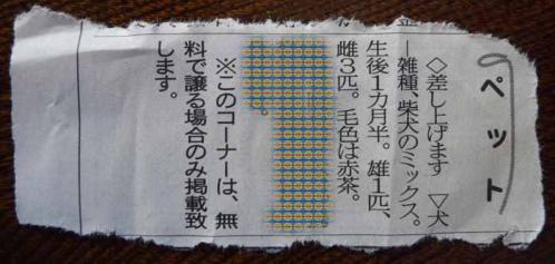 P1180250-AZUKI.jpg