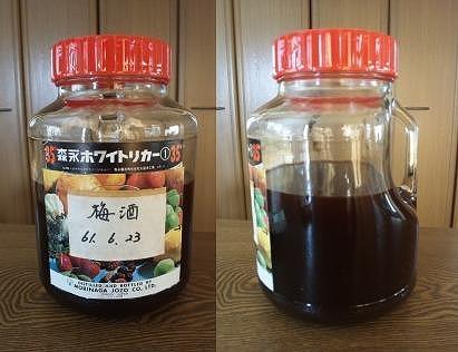 110807梅酒 (1)