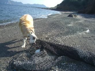 網引く漁師犬