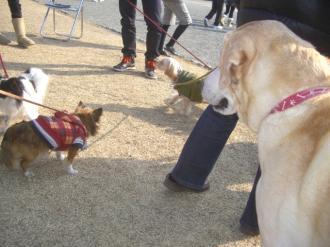 小型犬人気