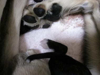 Puppy_100101_05.jpg