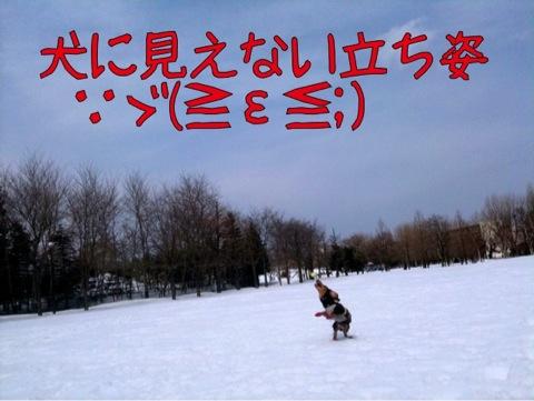 IMG_1168.jpg