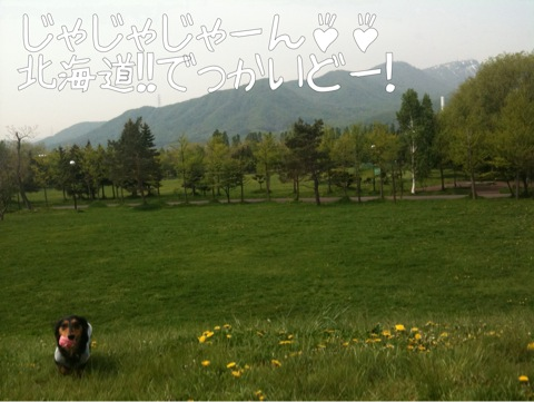 IMG_4220.jpg