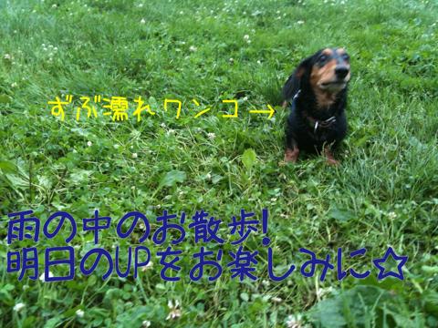 IMG_5733_20110715233040.jpg