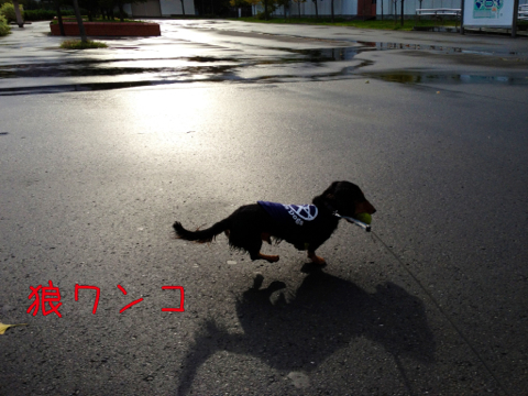 IMG_8899_20111017224353.jpg