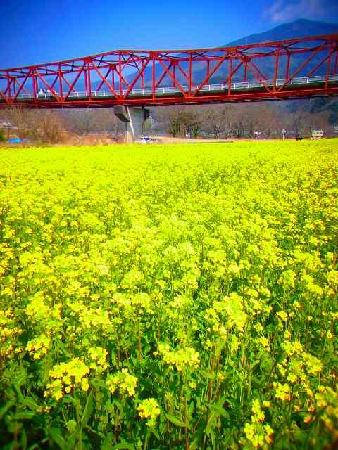 6大洲 河川敷