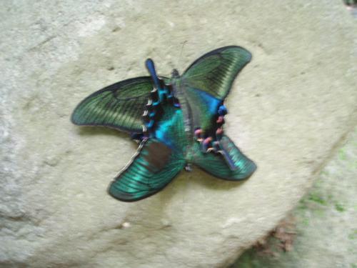 butterfly_convert_20110812223641.jpg