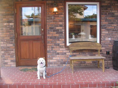 shopanddoggie_convert_20110810081117.jpg