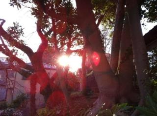 横浜の夕陽2