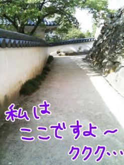 IMG_2801.jpg