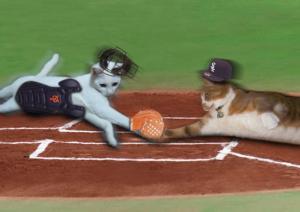野球猫プリン