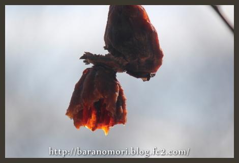 バードフィーダー 小鳥 餌